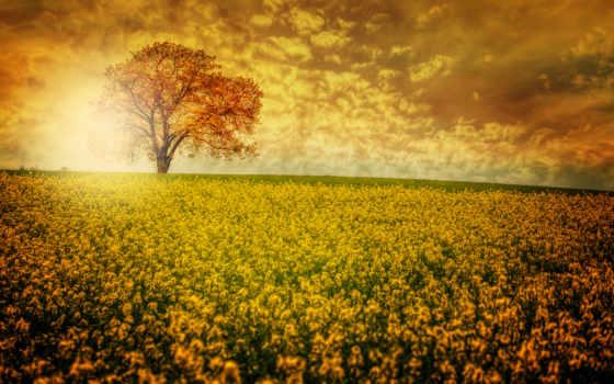 чарующие, scenery, пейзажи, fondos, escritorio, поле, цветы,
