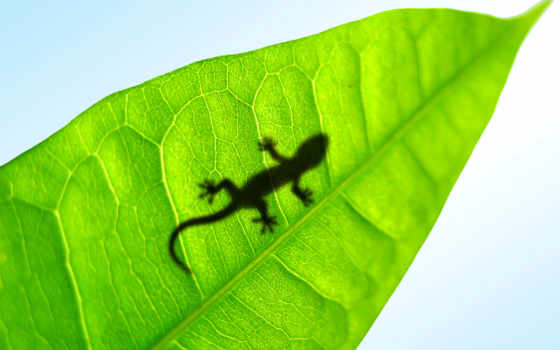 ящер, zhivotnye, листке, gecko, ящерицы, ящерка, маленькая, лист,