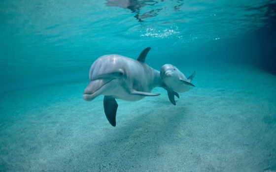 дельфины, underwater, world, картинку, под, водой,