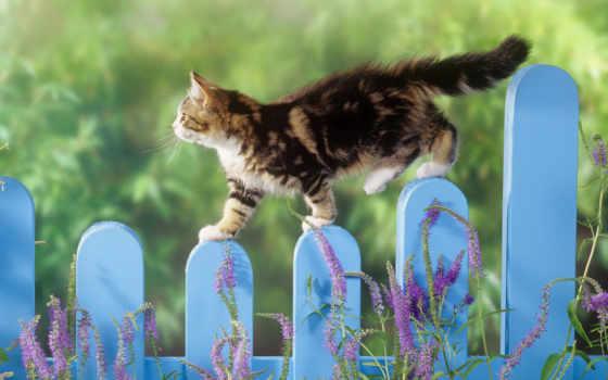 кот, кошки, заборе