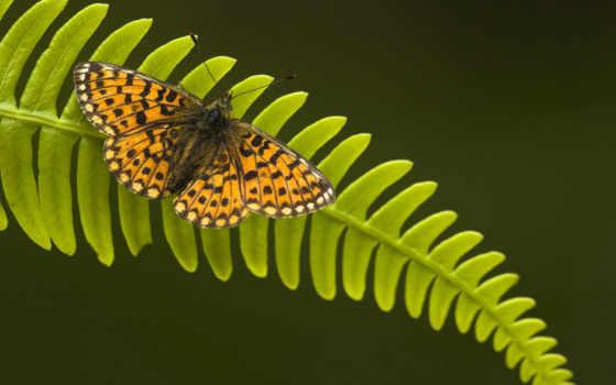 amazing, природа, free, pictures, images,