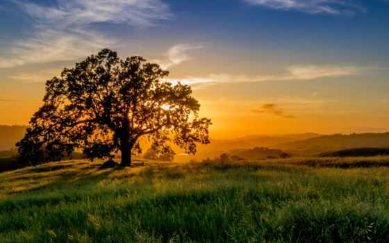закат, природа, трава, sun, облако, фото, небо, landscape, дерево, рассвет