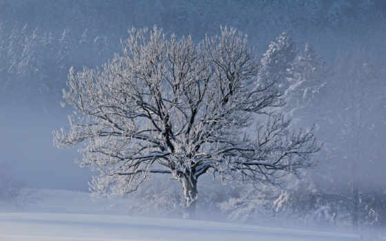 зима, природа Фон № 9685 разрешение 1920x1200