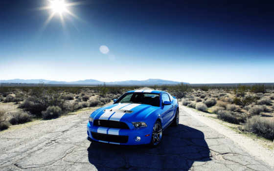 ford, shelby