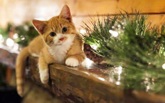 кошка, дом, праздник, картинка, cats, кошки, скачивание, hallpic, изображения, holidays, home, животные, kitten,