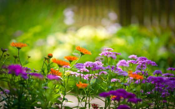 цветы, garden, макро