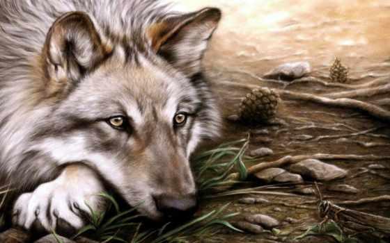 волк, одиночка, wpapers