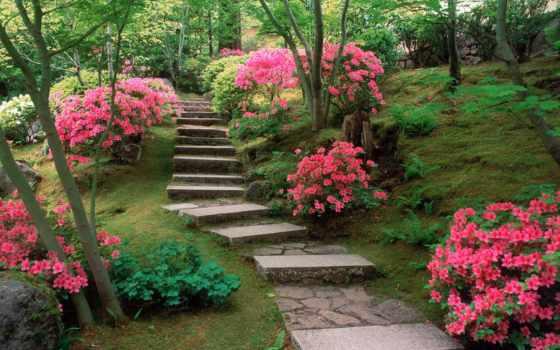 цветов, дорога, color, eiffel, paths, картинка, то,