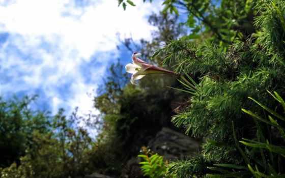 красочные, природа, великолепной, неповторимой, нежной, красивые, взгляд, завораживающей, умиротворяющей, июл,