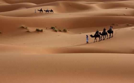 пустыня, caravan, пустыни, верблюды, караваны, camel, sands,