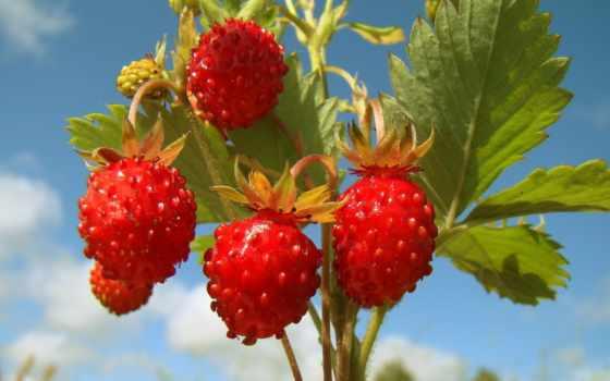 без, макро, регистрации, природа, подборка, красивые, фрукты, персик,