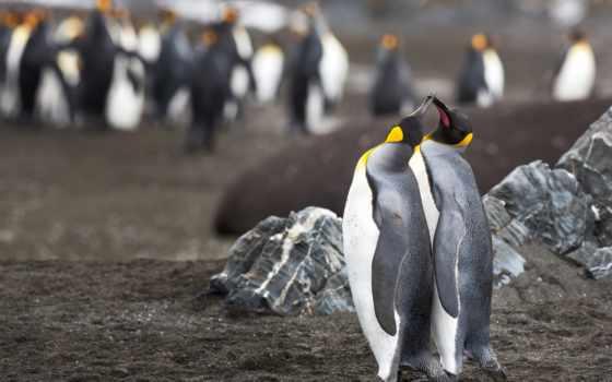 pinterest, penguins, фото, мм, photos, группы, информация, новости,