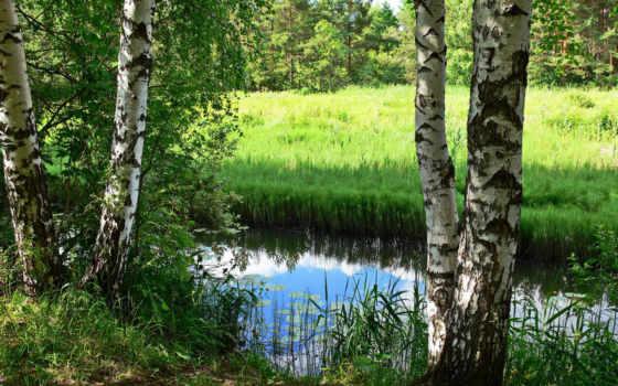 россии, reki, березы, russian, природа, ярославль, которосль, шумят, trees,