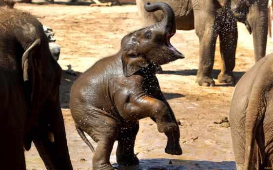 слон, zhivotnye, ствол