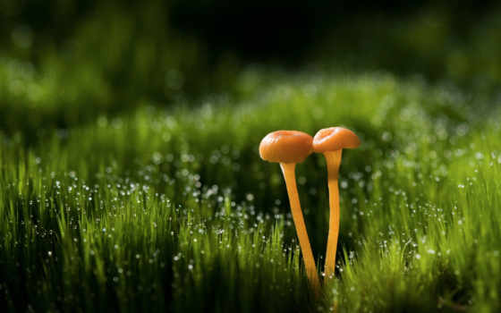 макро, боке, трава, капли, грибы, блики, роса, tochka, божья, galaxy, мох,