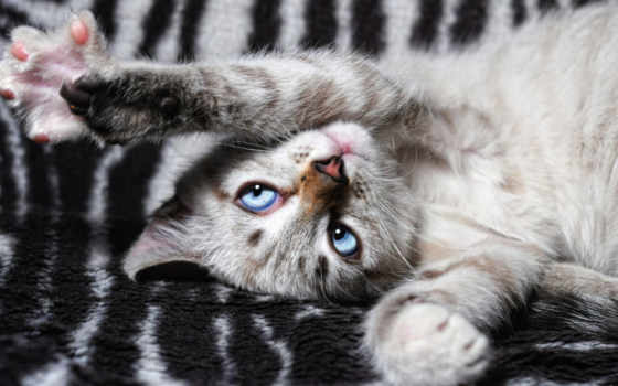 sur, vite, глаза, paws, кот,