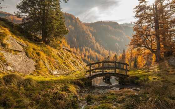 осень, над, природа, гора, мост, цитата, дерево, трава, но, лес