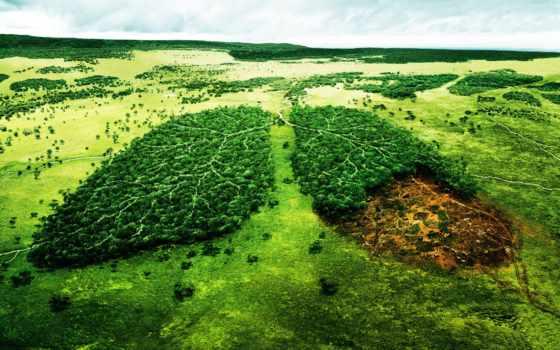природа, лес