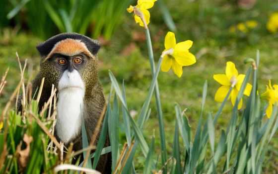 природа, обезьяна, цветы