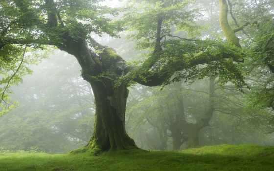 desktop, природа, лес, natur, best, wald,