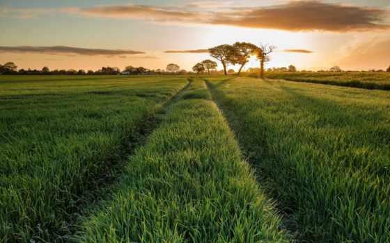 поле, rising, солнца, трава, природа, oblaka, дерево, небо, луг, травка, утро,
