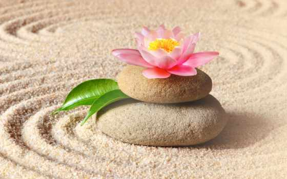 zen, песок, спа, stock, garden, images, скалы, lily, цветы, фото,