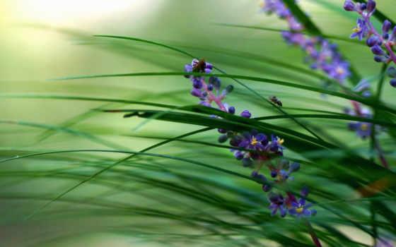 трава, цветы, растение