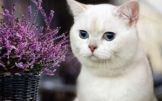 flowers, цветы, корзина, кот