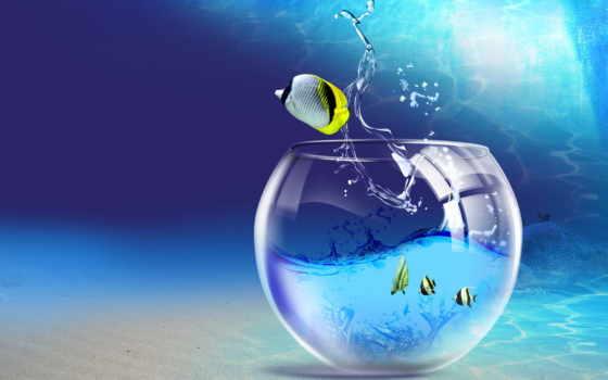 аквариум, рыбки, water