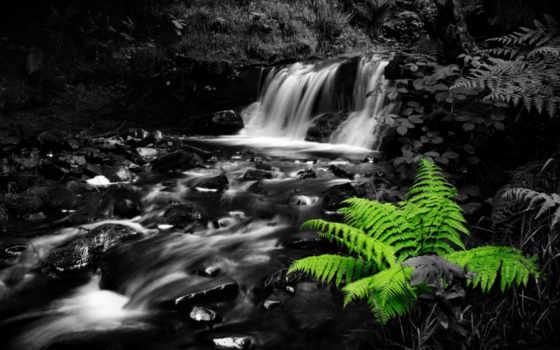 природа, dark, water, land, водопад, jungle, лес, растения, папоротник, беспланые,