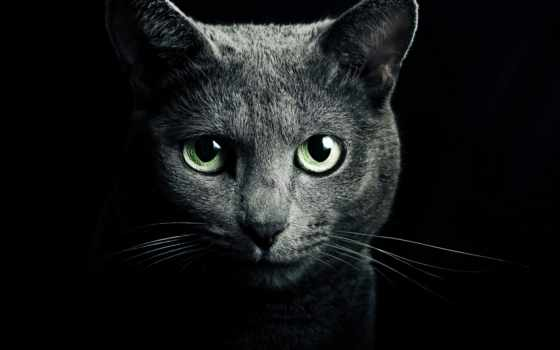 iphone, plus, кот, черная, free, black, качество, high,