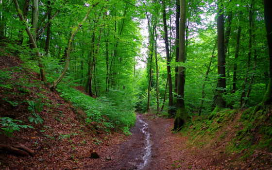 пейзажи -, лесными, тропами, trees, яndex, пользователя, лес, видами, леса, бавария,