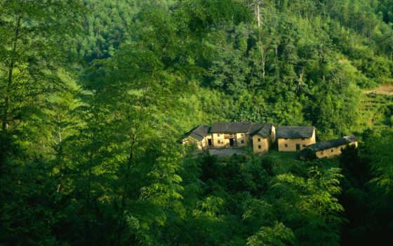 house, лес, зелёный, лесу, дома, jungle,