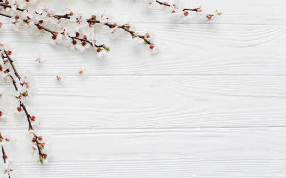 лепестки, cherry, цветы, maneken, весна, white, nis, mannequin, россия, япония, розовый