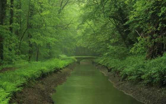 природа, леса, река