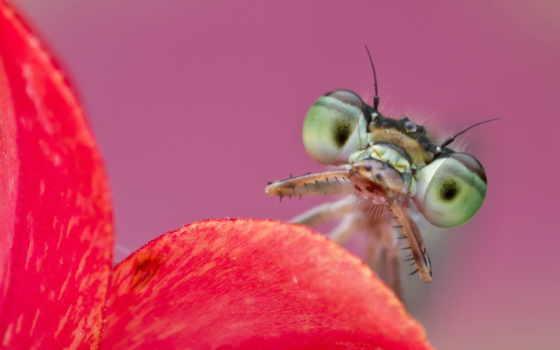 бабочка, zhivotnye, главная