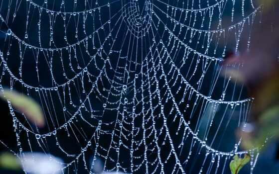 web, капли, паук, water, сетка, каплях, blue, разрешениях, разных, drops,