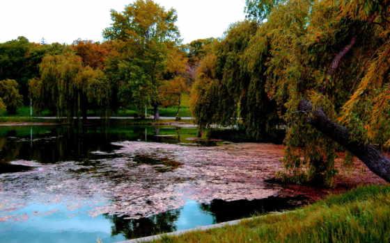 romania, природа, картинка, gheraiesti, бухарест, озеро, park,