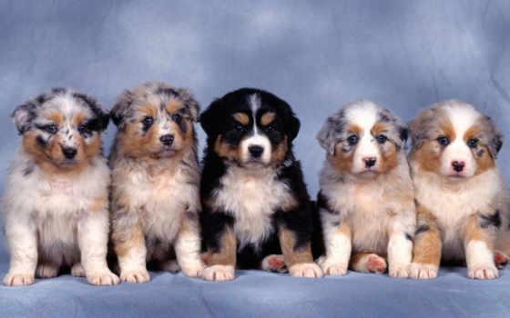 5 щенков разномастных