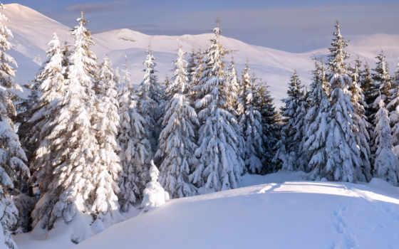 winter, елки, лес, landscape,снег, фотообои, красивое,