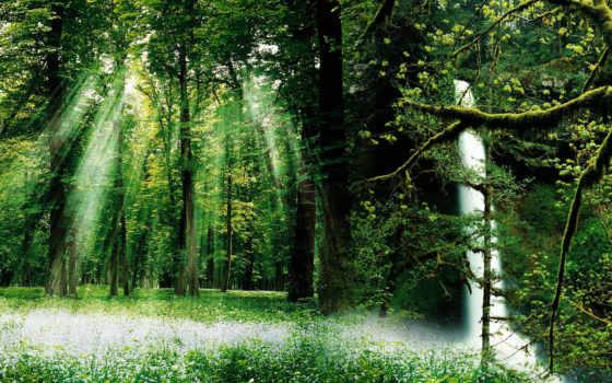 лесная, поляна, солнца, лучами, разрешениях, разных, лес, освещаемая, коллекция, лесу,