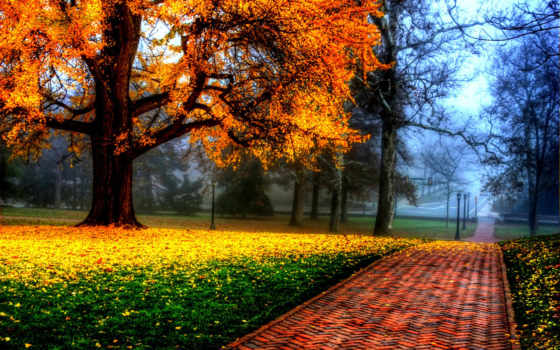 осень, яndex, коллекциях, collections, коллекция,