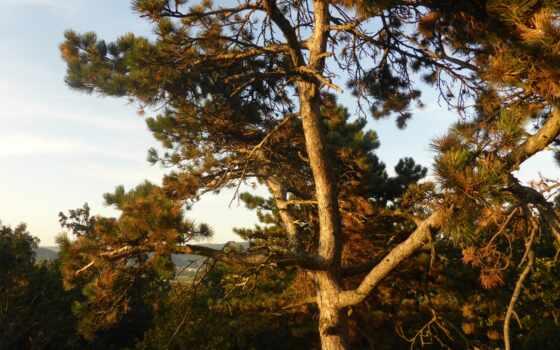 pine, земли, гора, fancy, stay, amongst, treehouse, частное, wilderness, blue