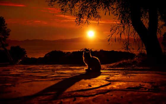 закат, кот, природа, sun, animals, небо, дерево