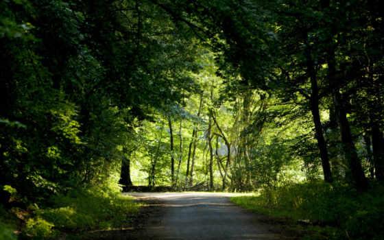 дорога, лес Фон № 9102 разрешение 1920x1200