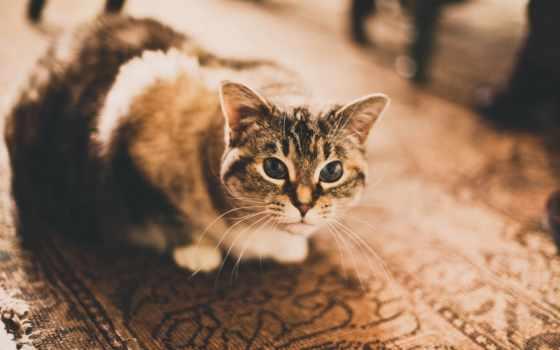 кот, photography, кошка