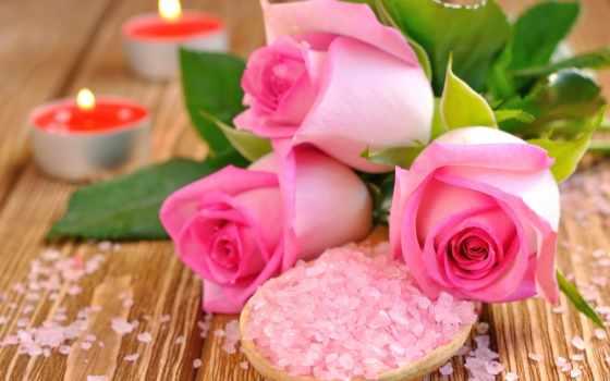 розы, бутоны, сол
