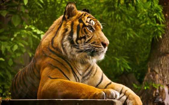 zoo, viagra, london