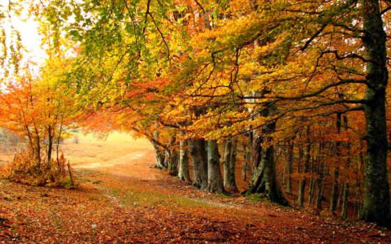 осень, года, италии, time, desktop, картинка, природа,