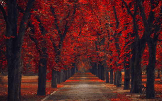 fondos, осень, red, pantalla, rboles, otoño, naturaleza, parque, текстура,